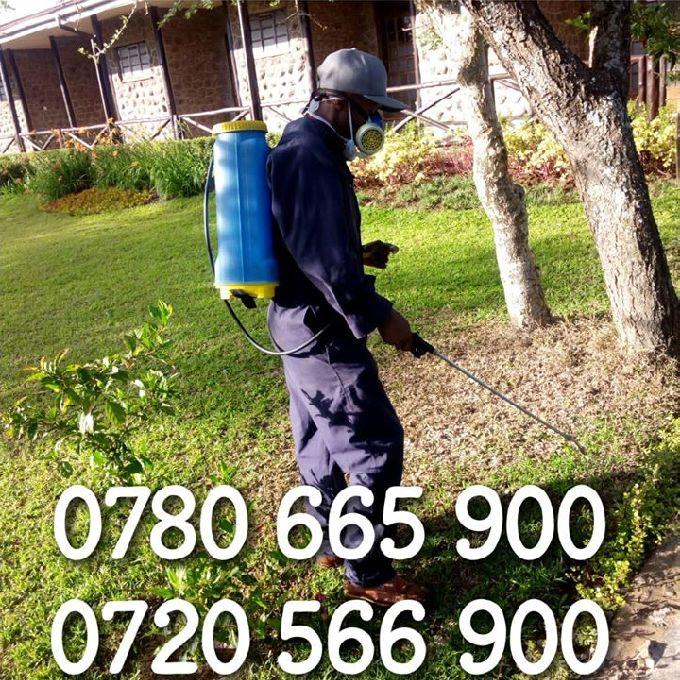 Effective Pest Control Services