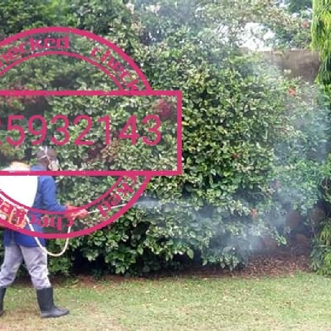 Pest Control Services in Nairobi