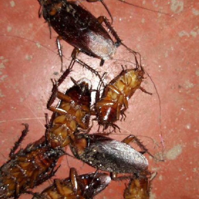 Cockroach Control Help in Utawala