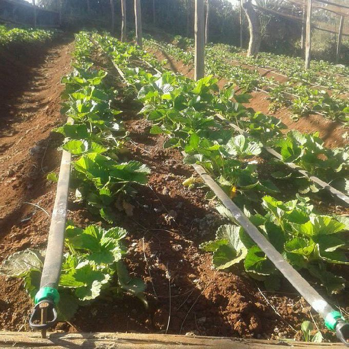 Drip Irrigation Systems Experts