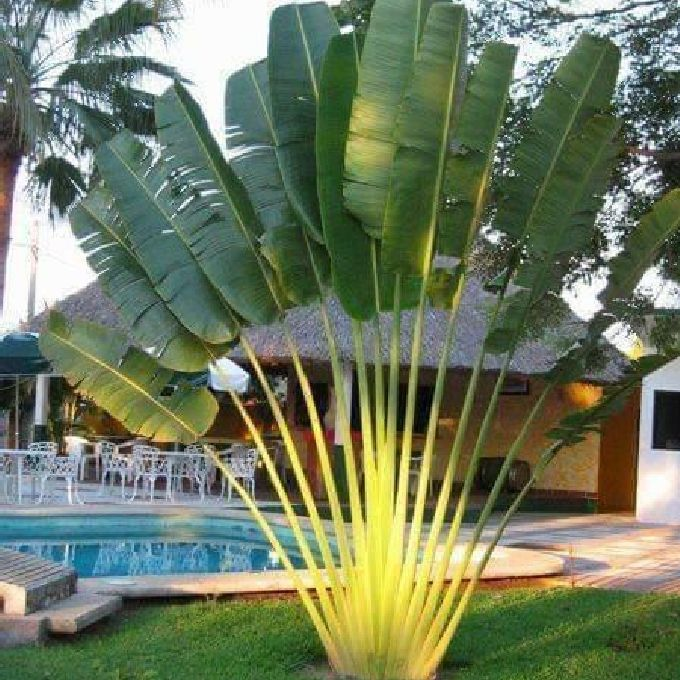 Proffesional Landscaping Experts in Nairobi
