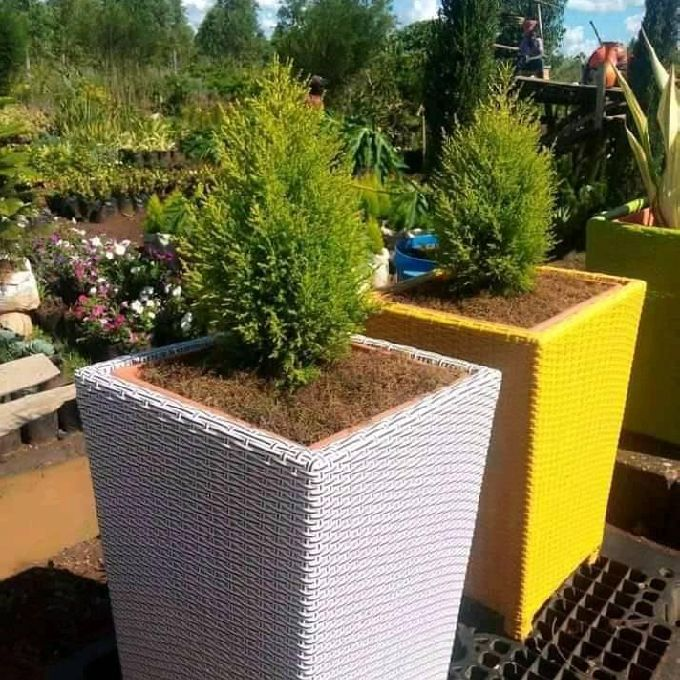 Indoors Plants Supply & Installation Service Providers