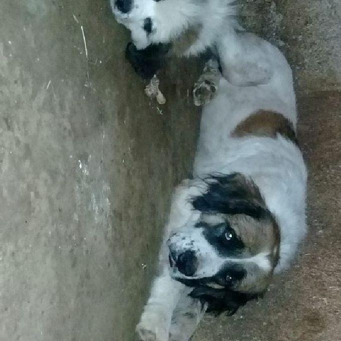 Dog Trainer in Kenya