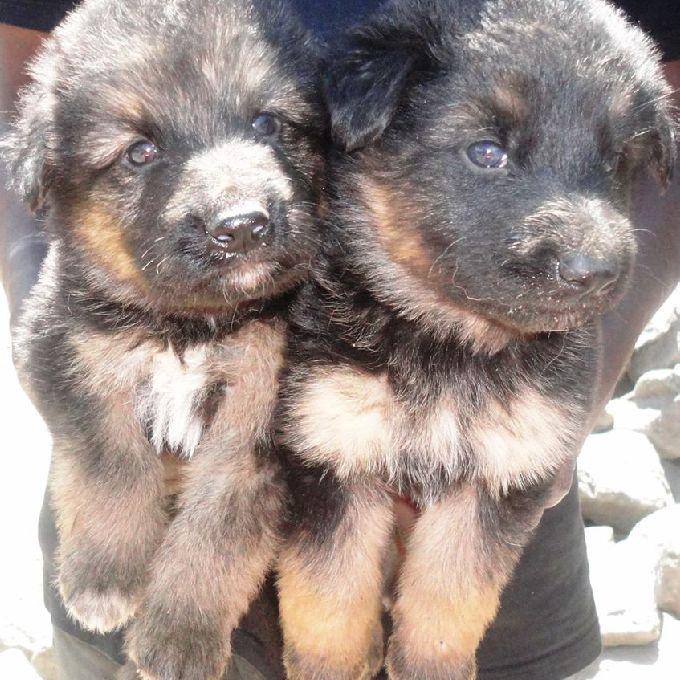Dog trainers in Nakuru