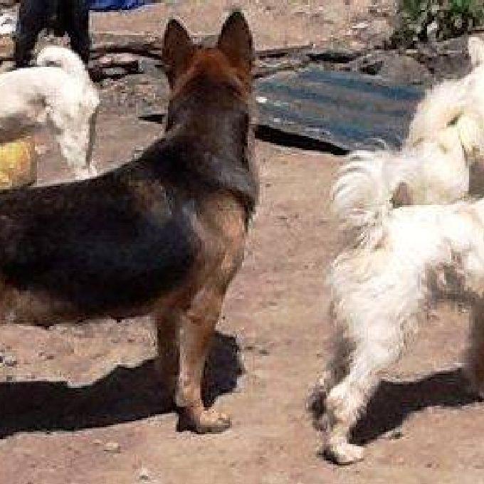 Professional Dog Trainers in Nakuru