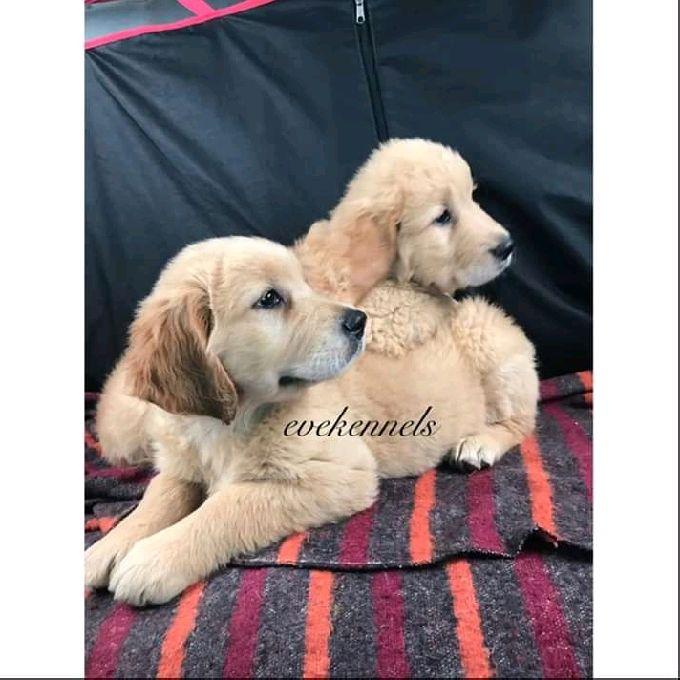 Professional Dog Training Services