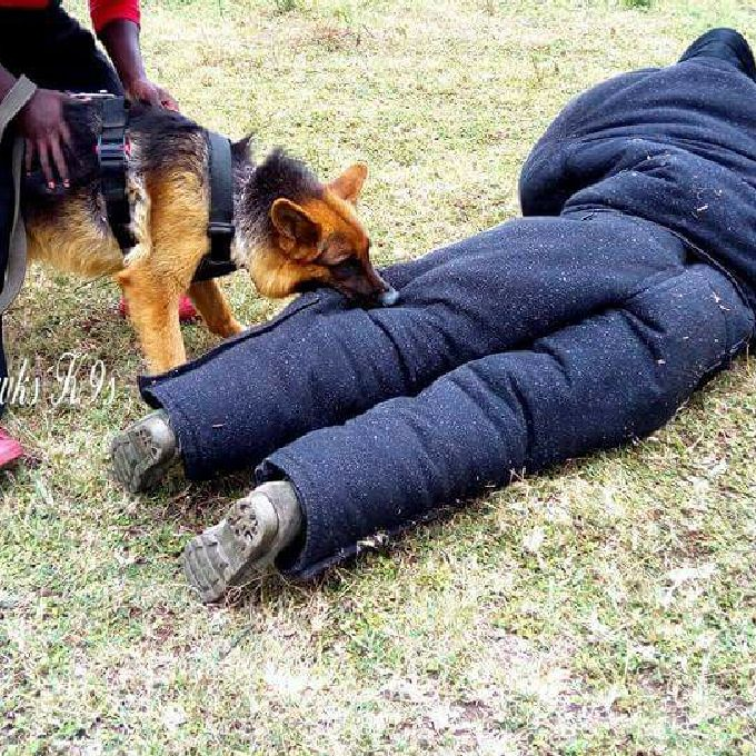 Dog Attack Training Course