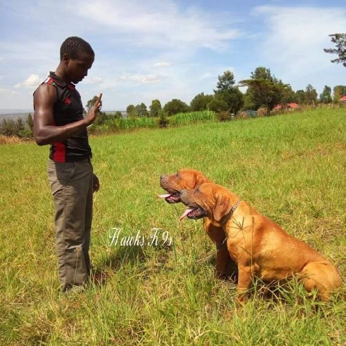 Command Training for Dogs