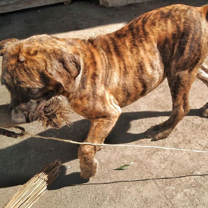Dog Training and Supply