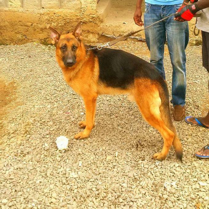 Dog Training in Migosi Estate