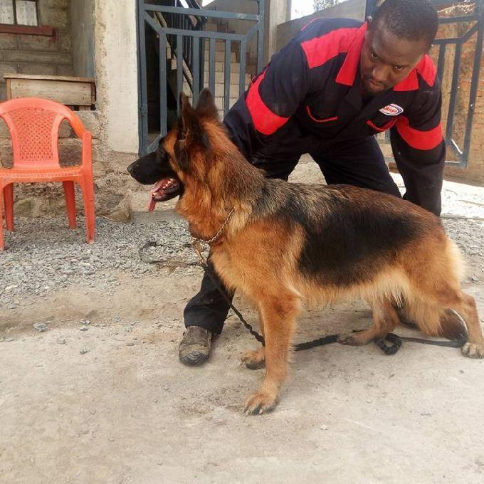Professional Dog Handler