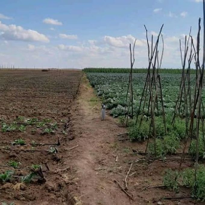 Agribusiness Farming Water Expert