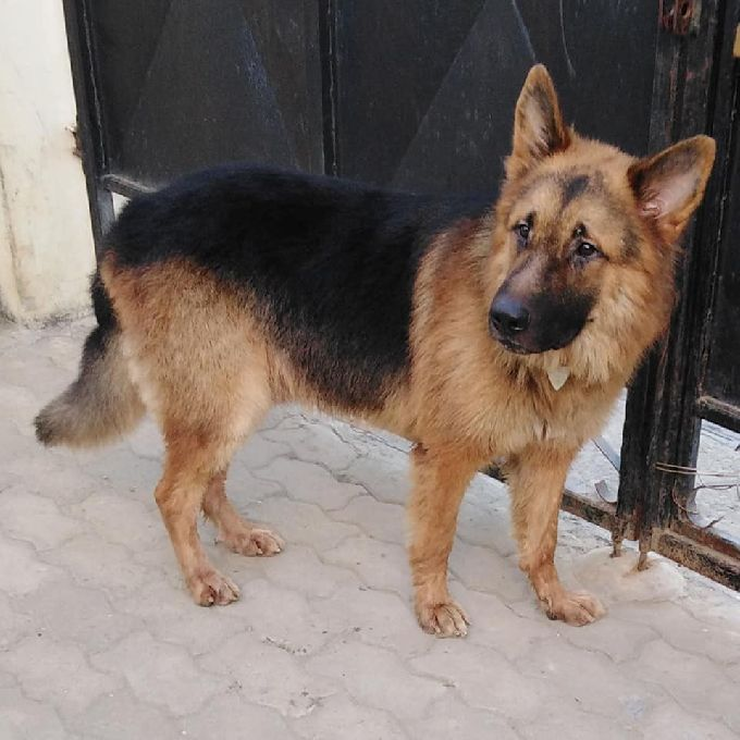 Dog Trainers in Mombasa
