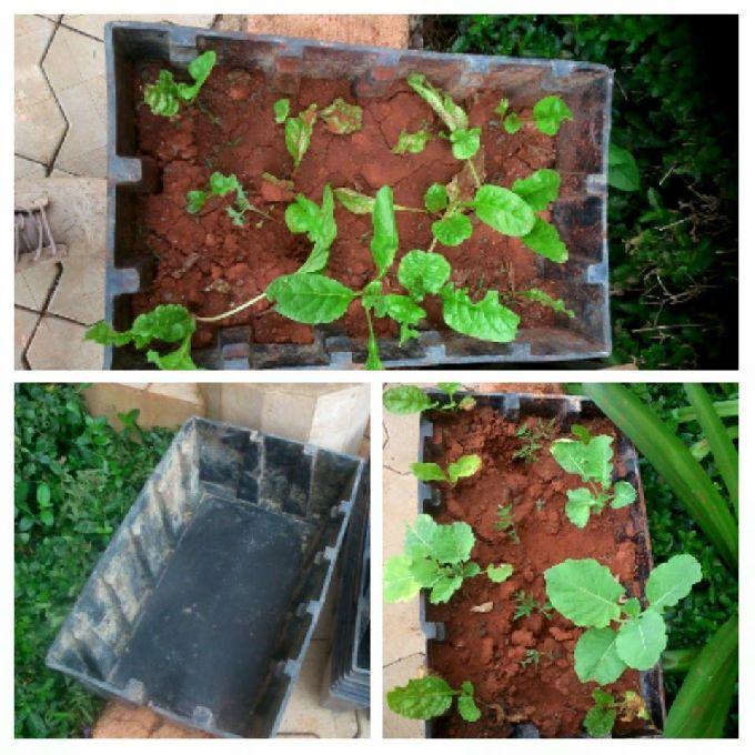 Kitchen Garden Experts in Nyeri