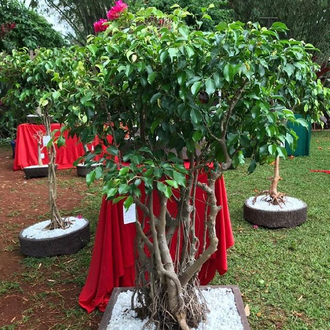 Artificial Plants in Nairobi