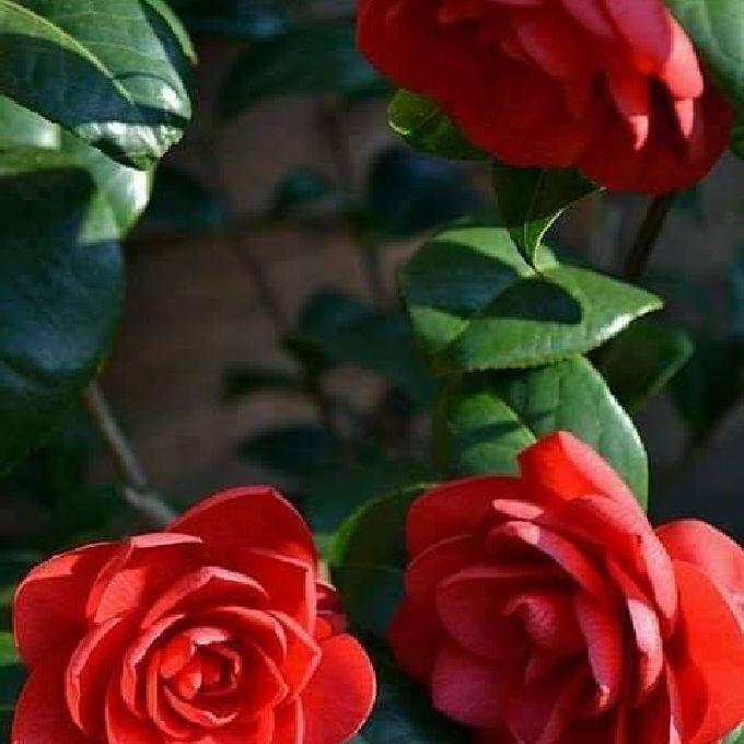 Garden Flowers for Sale