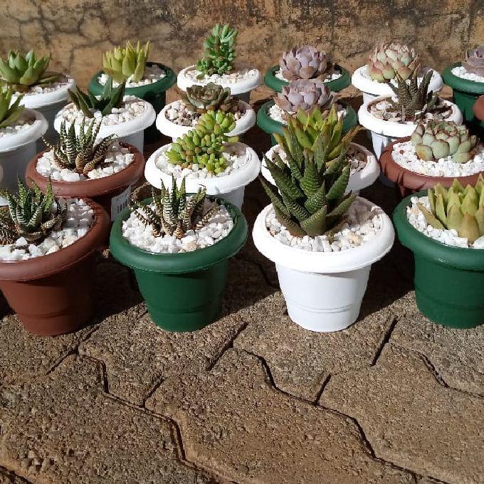 Indoor Succulents in Kilifi
