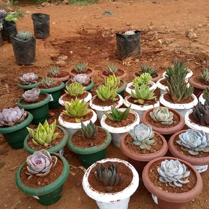 People who Sell Succulents in Kilifi