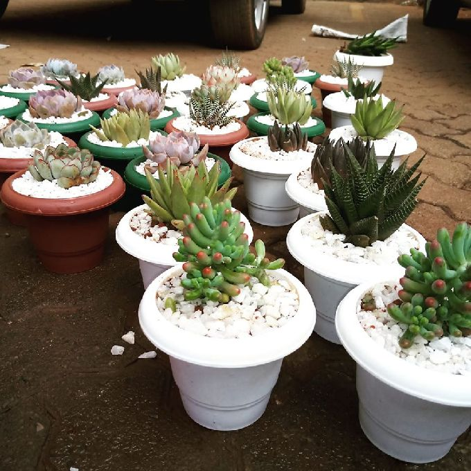 Beautiful Succulents for Sale