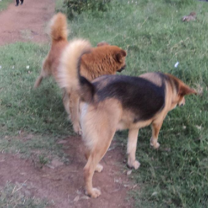 Dogs Treatment Experts for Hire