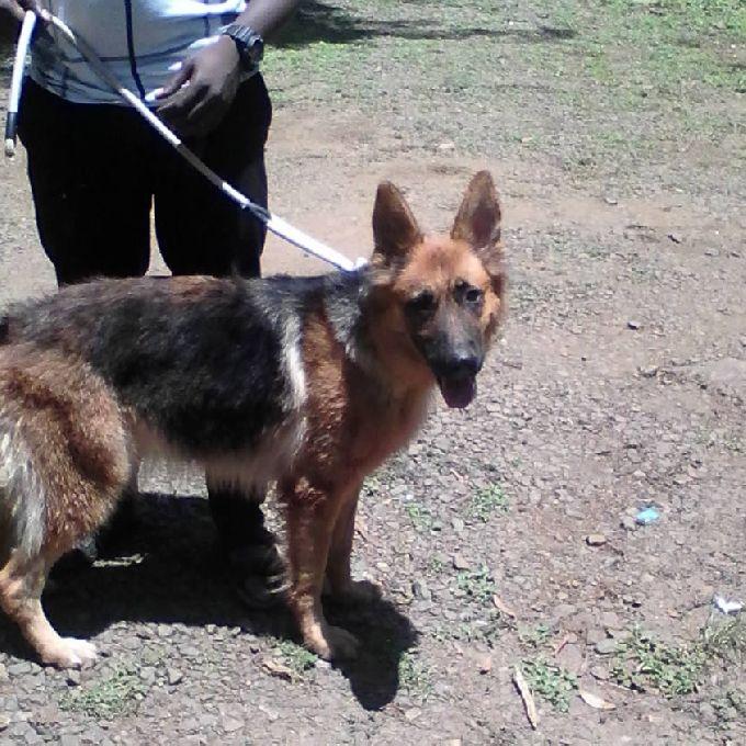 Affordable Dog Doctors in Nairobi