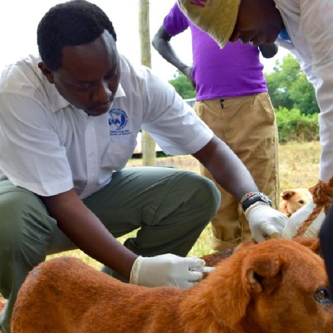 Professional Dog Vetinary Services in Nairobi