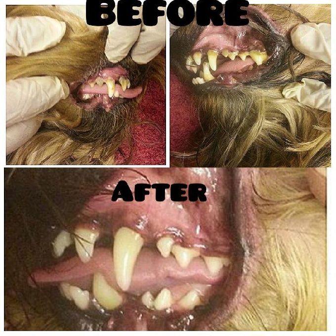 Dental Scaling For Dogs in Nairobi