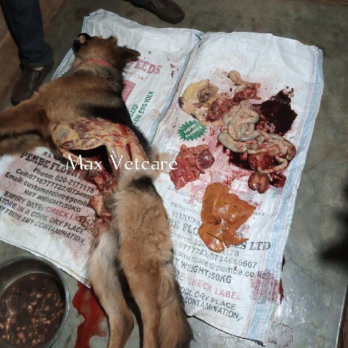 Animal Post Mortem Services