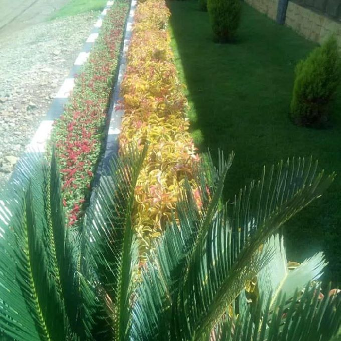 Neema  landscaping