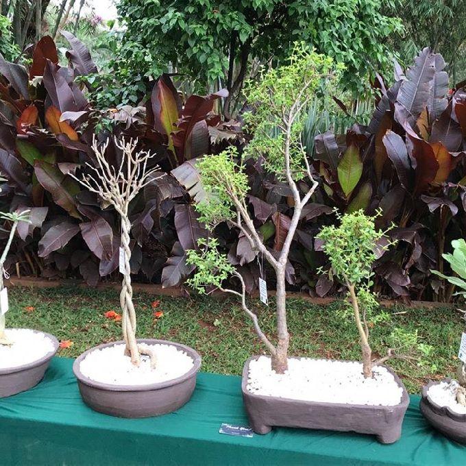 MIKA landscapers  (kenya)